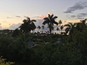 vue palmier 800-2